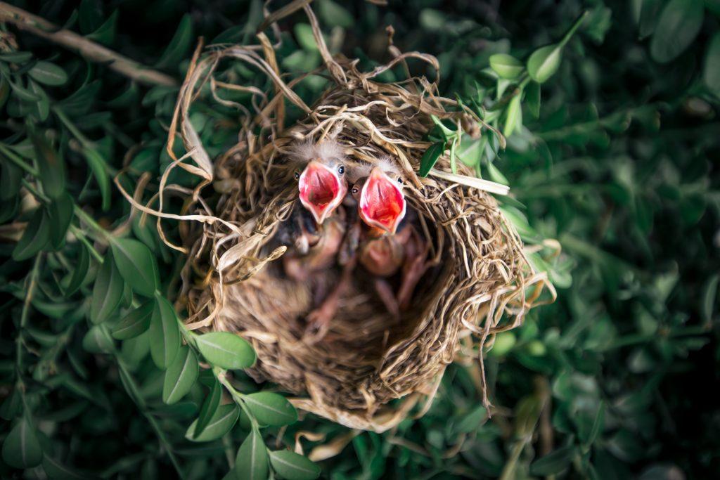Gagal bukan berarti akhir dari perjalanan bisnismu! Jangan-jangan kamu justru menetas lebih dulu daripada telur lainnya dan siap terbang saat yang lain mulai menetas nanti?